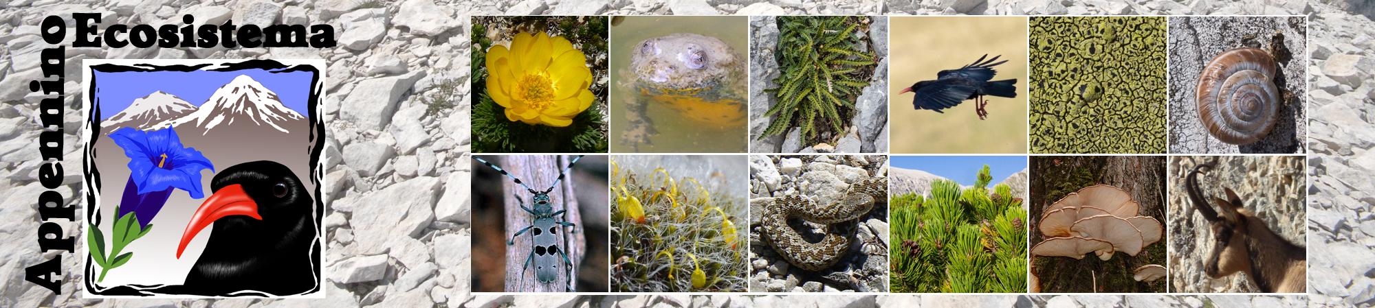 Appennino Ecosistema L'Associazione assicura la protezione di ecosistemi e specie montane con priorità rispetto alle attività umane in tutte le aree protette utilizzando le migliori conoscenze scientifiche nel campo della ricerca ecologica